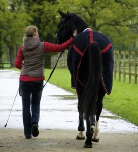 Handwalking Horse
